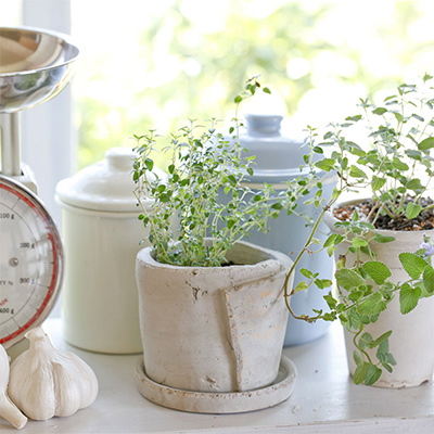 Grow Herbs Indoors for Flavor and Fragrance