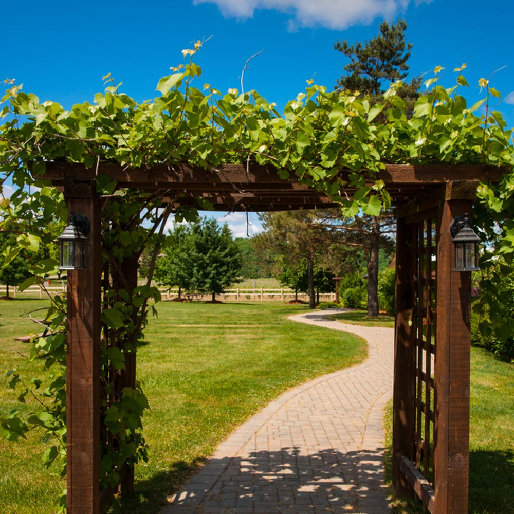 Fast Growing Vines For Shade The Home