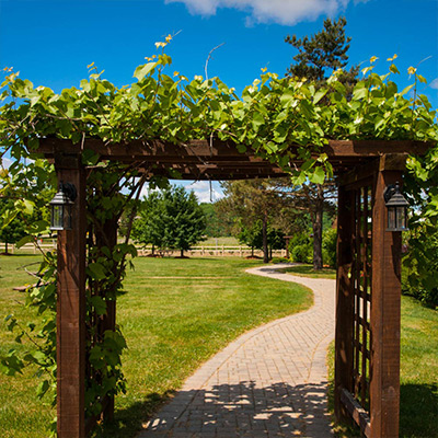 Grow Vines for Shade