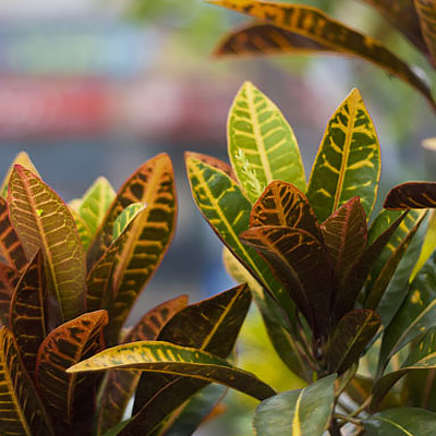 Grow Your Own Jungle with Tropical Houseplants