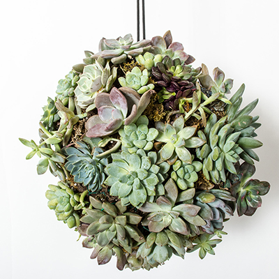 Hanging Centerpiece: DIY Succulent Ball