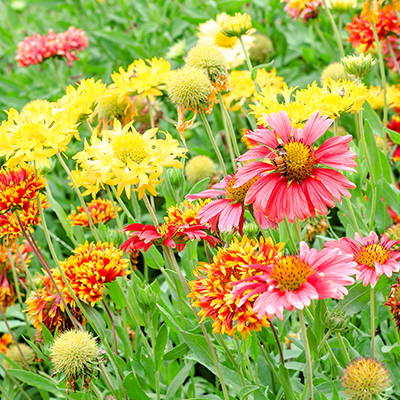 Perennials in a garden