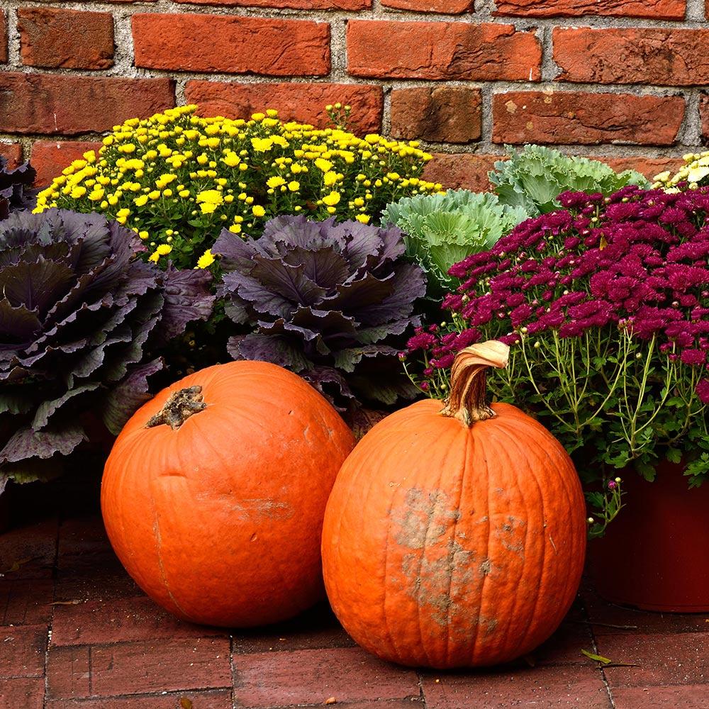 Harvest Decor Ideas for Your Balcony