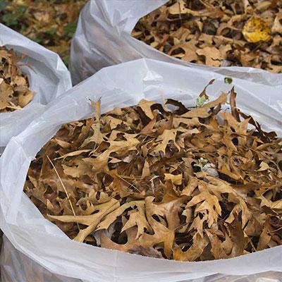 Harvest Leaves for Free Garden Mulch