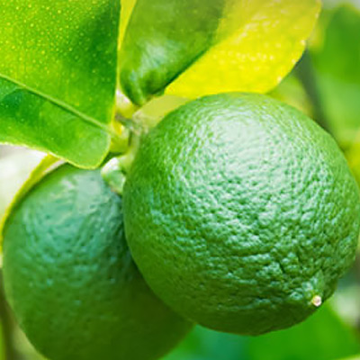 Citrus Tree Problems: How to Check for Health - The Home Depot