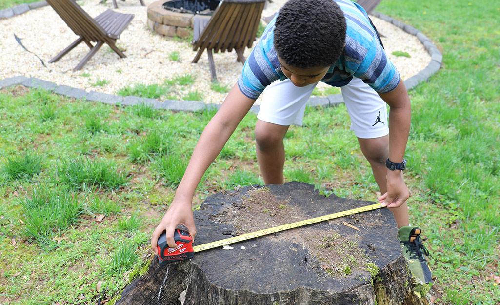 Một cậu bé đang đo gốc cây.