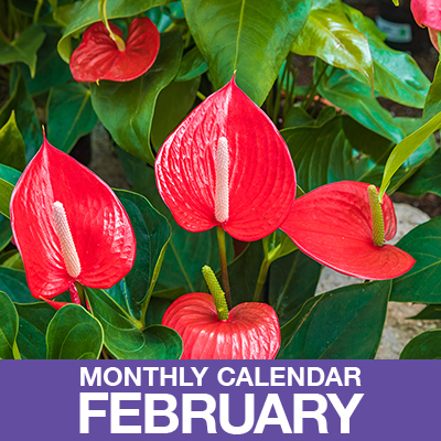 Here's Your February Gardening Calendar