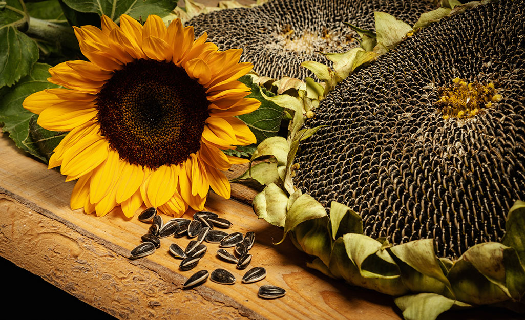 How to Save Flower Seeds