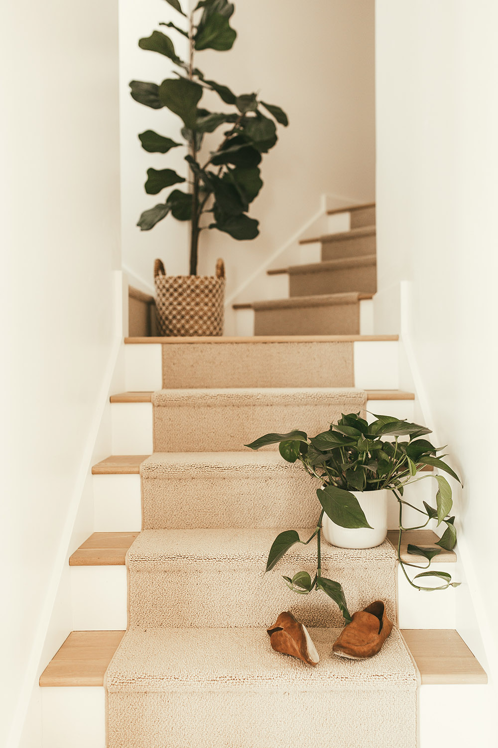 Staircase with carpet and green plants