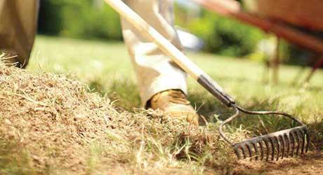 Spread and rake mulch - Add Mulch Your Plants