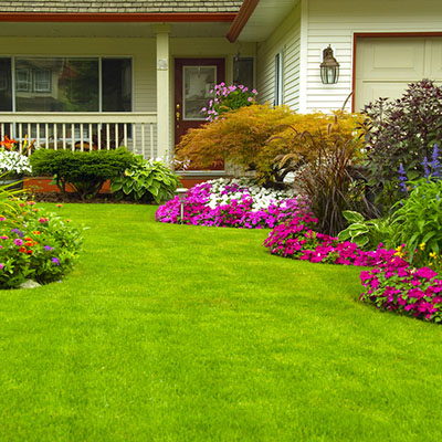 Yard with lush plants and flowers after lawn aeration