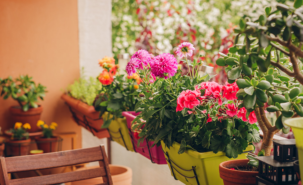 An apartment balcony with pots of orange, red and pink flowers on the railing to attract hummingbirds.