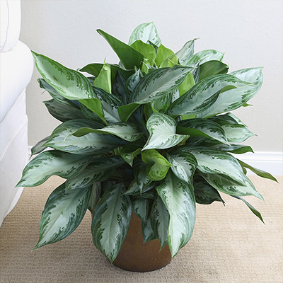 How to Be the Best New Houseplant Parent