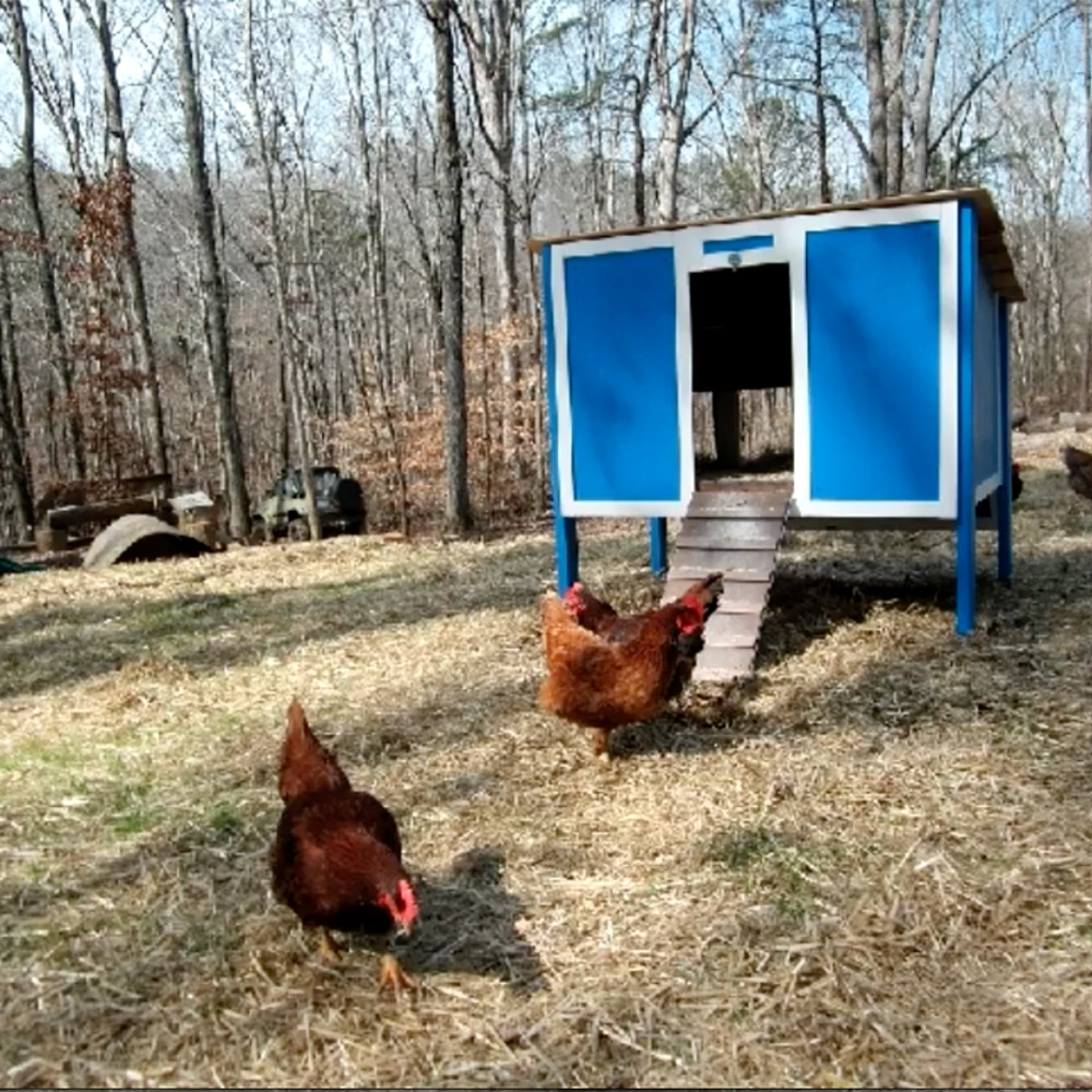 A blue chicken coop surrounded by chickens.