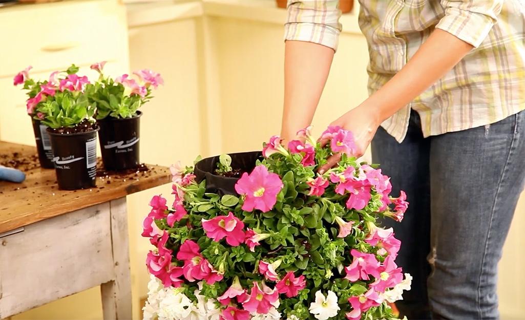 Một người trồng hoa trên đỉnh tháp hoa.