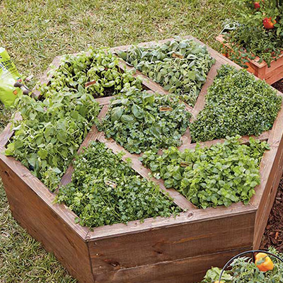 hexagon planter