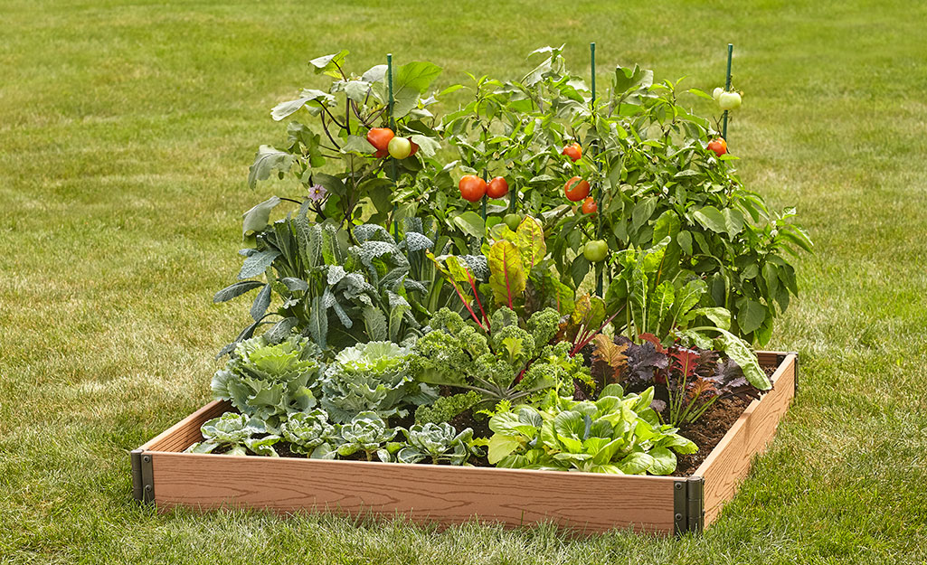 A raised garden bed with a variety of mature edible plants.