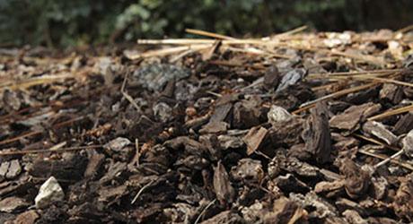 Wood Mulch - Mulch Buying Guide