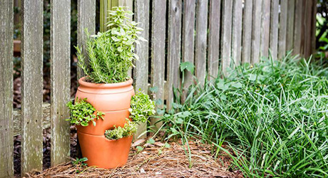 A terra cotta strawberry planter beside a wood fence.