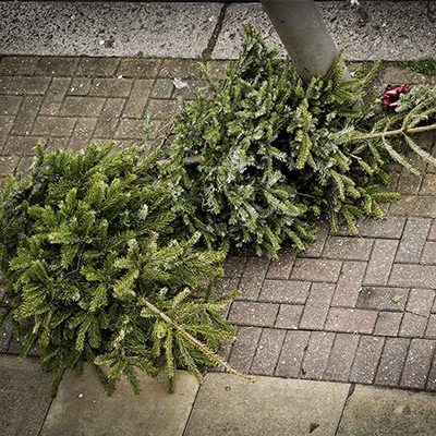 How to Care for and Recycle a Living Christmas Tree