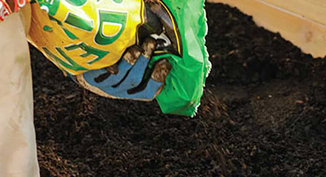 Add fertilizer to your soil - Caring for Annuals