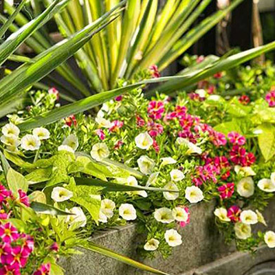 How to Care for Annuals
