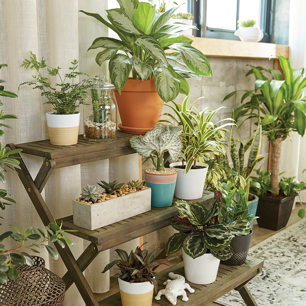 A collection of indoor plants.