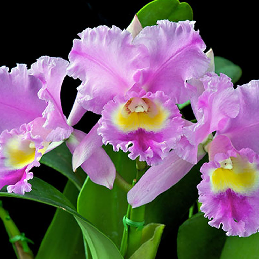 How To Get More Orchid Blooms The Home Depot