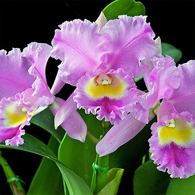 How to Care for Orchids and Get More Blooms