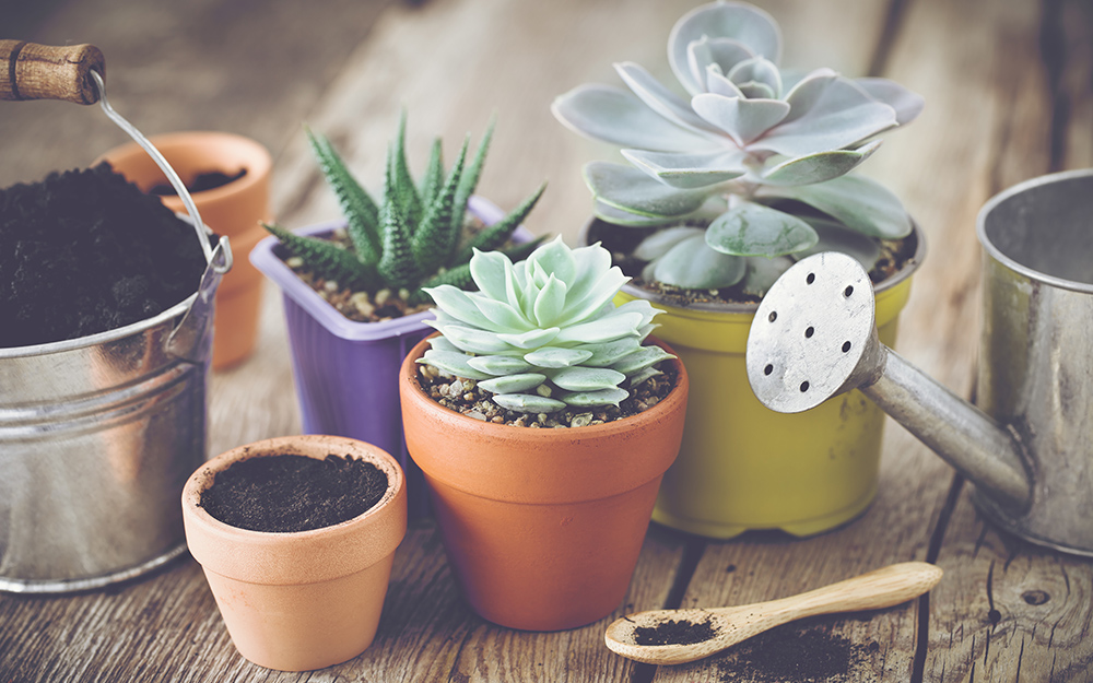 collection of different potted succulents