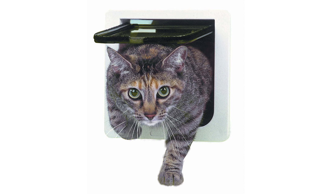 Cat moving through a basic flap cat door.