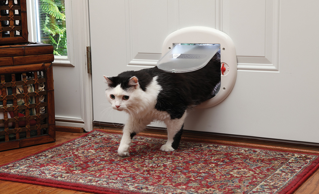 Cat entering a home through the 4-way model of cat door.