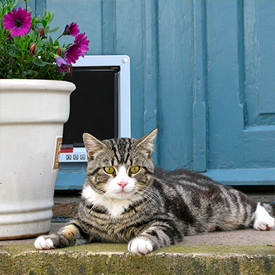 A cat lying down outdoors near a cat door.