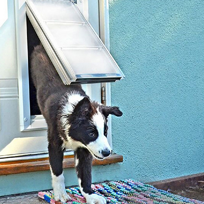 A dog coming in a dog door