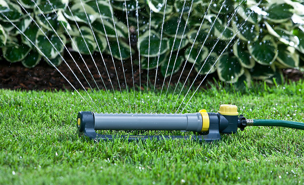A lawn being watered with a sprinkler timer.