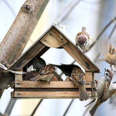 Best Bird Food for Your Feeder