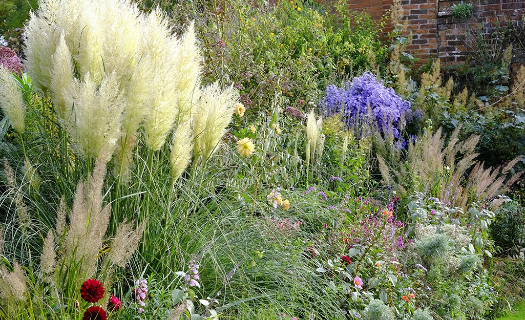 A sunny border with ornamental grass and perennials.