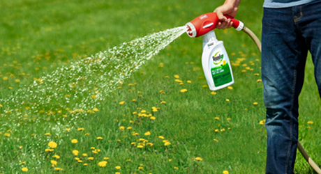 How to Kill Weeds in Lawns