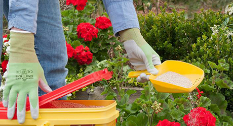How to Kill Weeds in Gardens