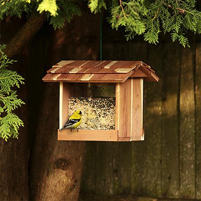 A bird feeder hanging in a backyard