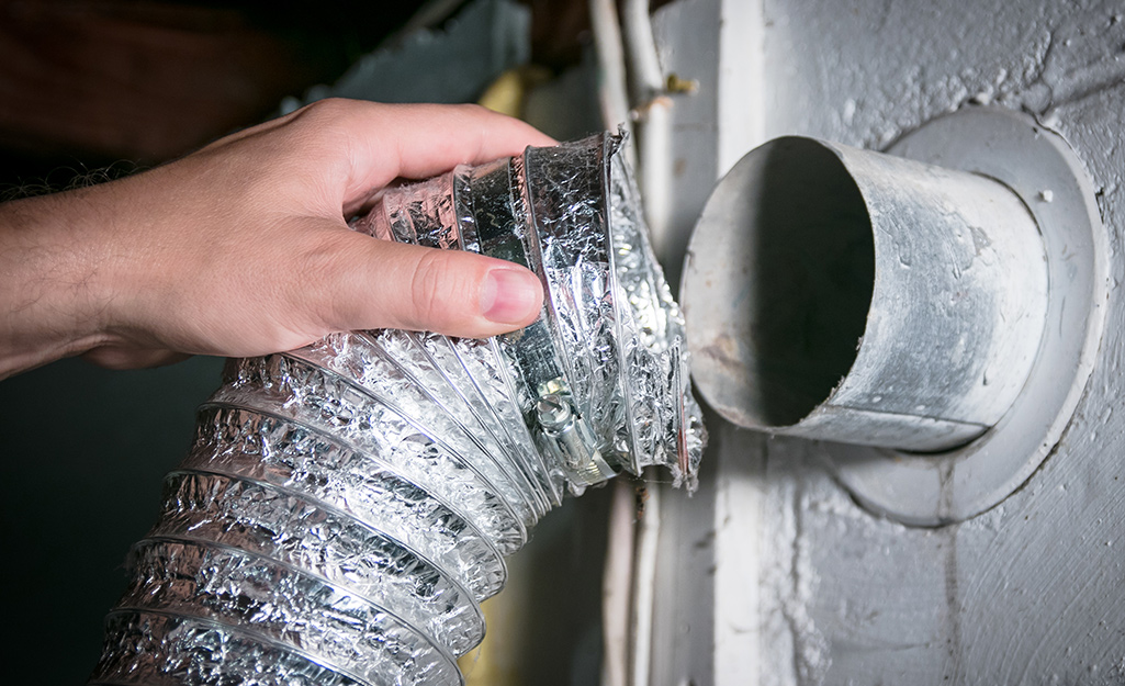 How To Clean A Dryer Vent The Home Depot,What Is A Cotyledon
