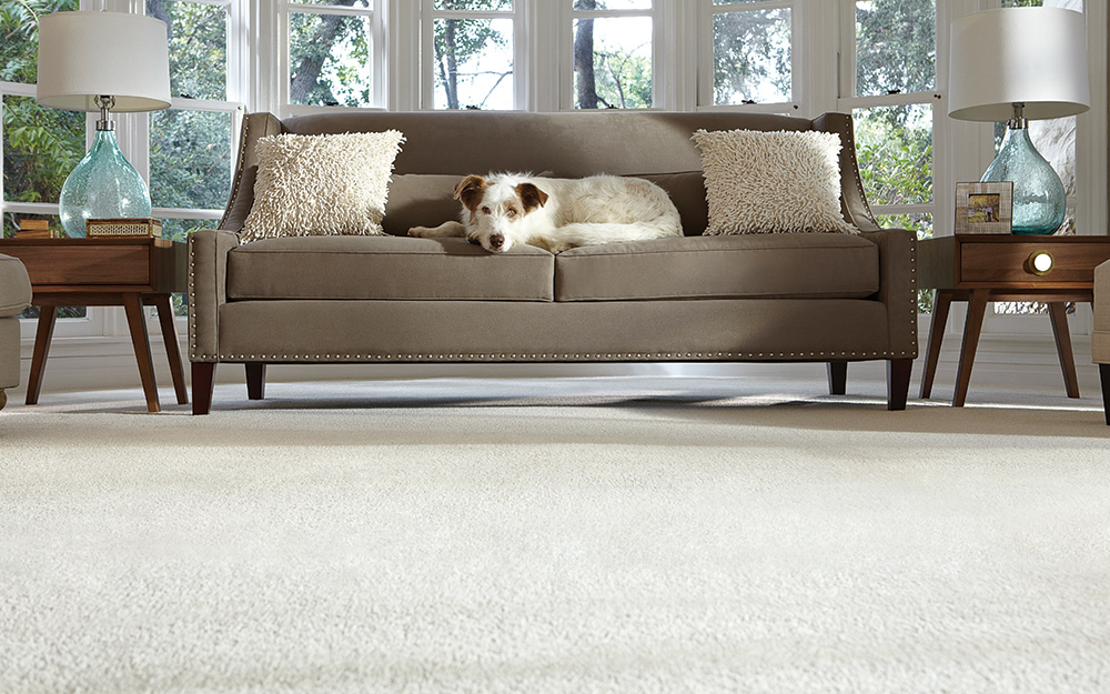 Room with clean carpet and dog laying on sofa
