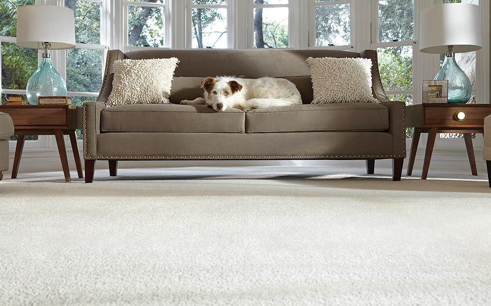 Phòng có thảm sạch và chó nằm trên ghế sofa