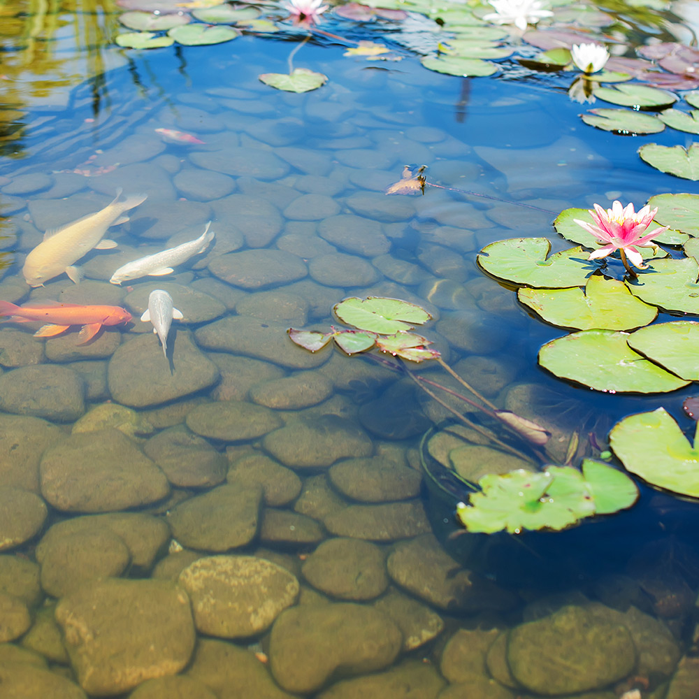 How To Build A Pond The Home Depot