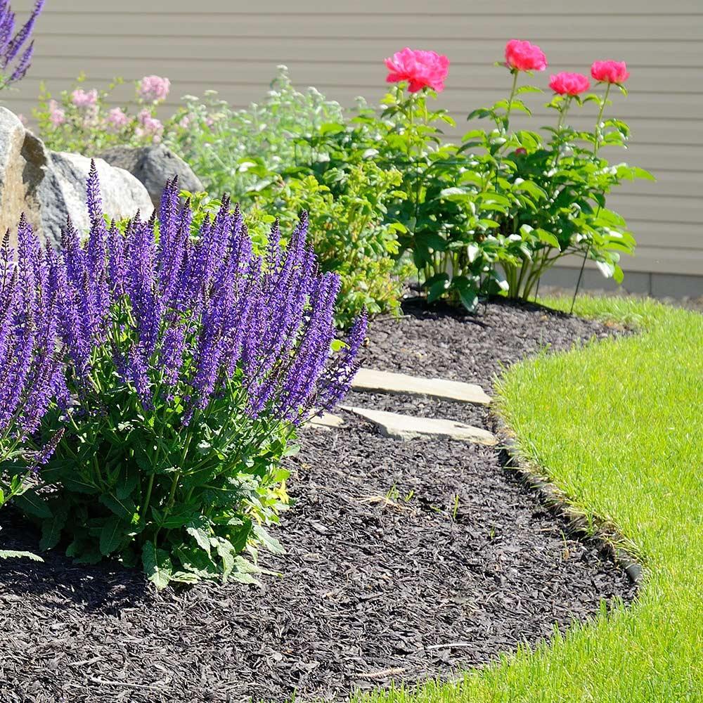 How To Create A Rain Garden The Home Depot