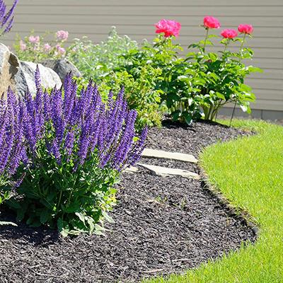 Best Plants For A Rain Garden The Home Depot