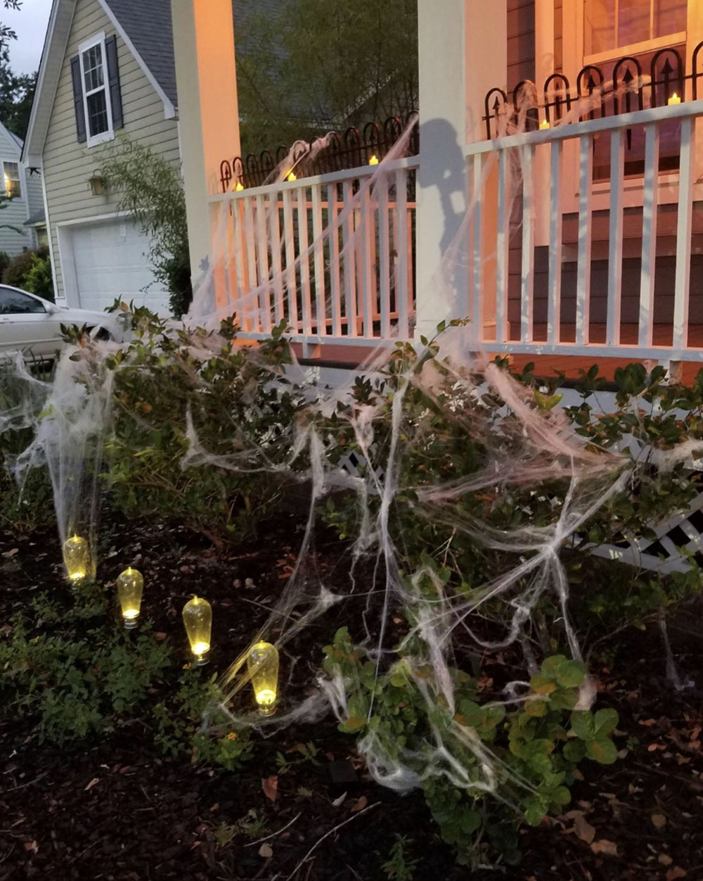 A row of bushes decorated with spider webs.