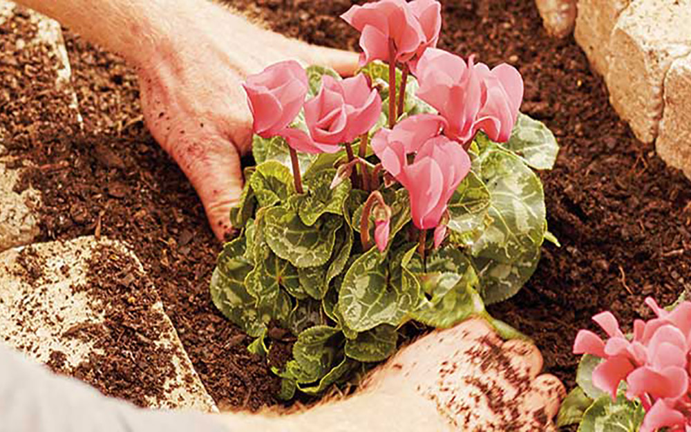A person planting flowers into the spiral herb garden soil.