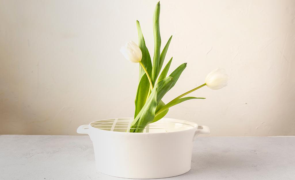 Hoa tulip trong chậu màu trắng.