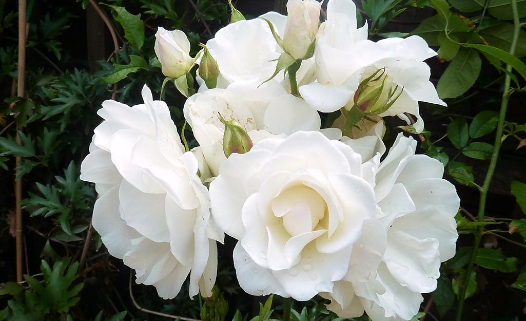 Dreamy White Flowers